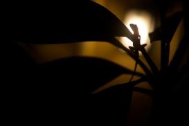 Lizard Light
